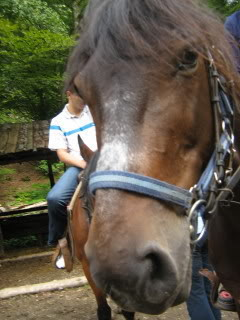 Ranch Bubač Konji_1180_1-1