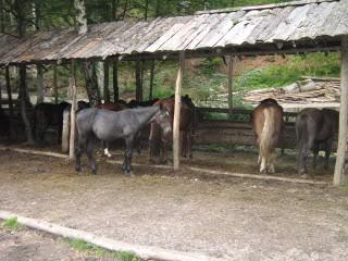 Ranch Bubač Razno_2458_1
