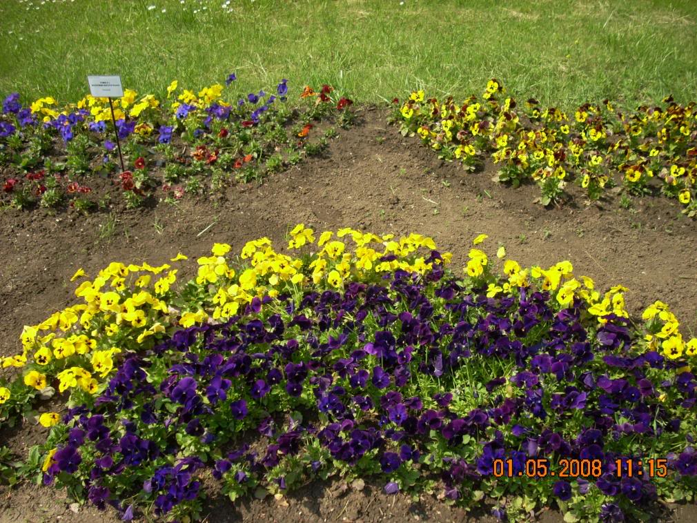Gradina Botanica din Iasi DSCN2339