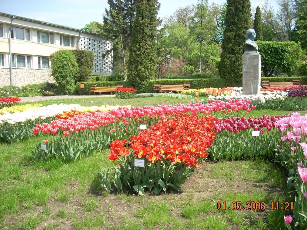 Gradina Botanica din Iasi DSCN2353