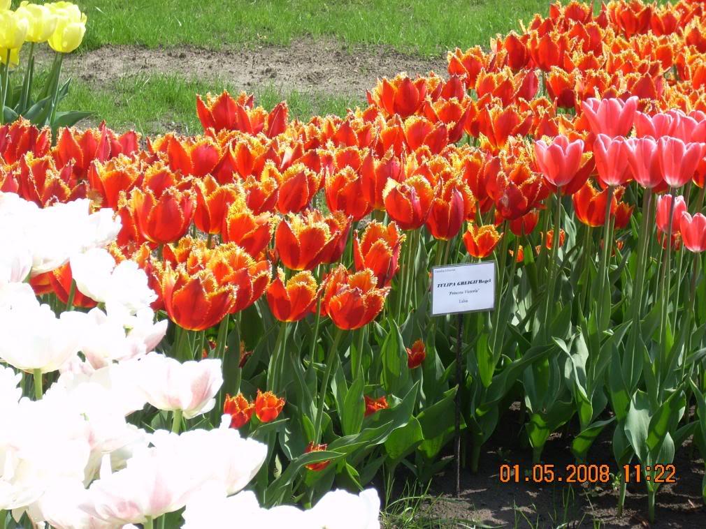 Gradina Botanica din Iasi DSCN2355