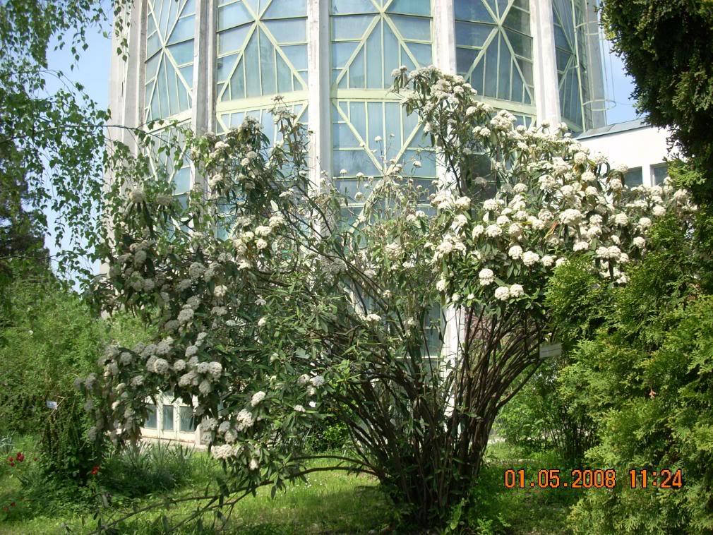 Gradina Botanica din Iasi DSCN2358