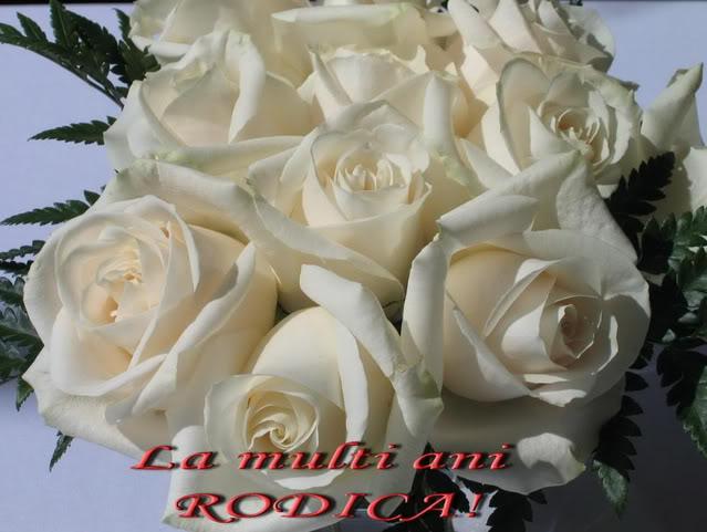 La Multi Ani ! Trandafirialbi-