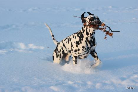 [avsluttet] Fotokonk. Februar - Lek i snø Furry11mnd2