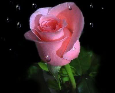AQUI ESTOY OTRA VEZ. !HOLA A TODOS! Beautiful-rose-1