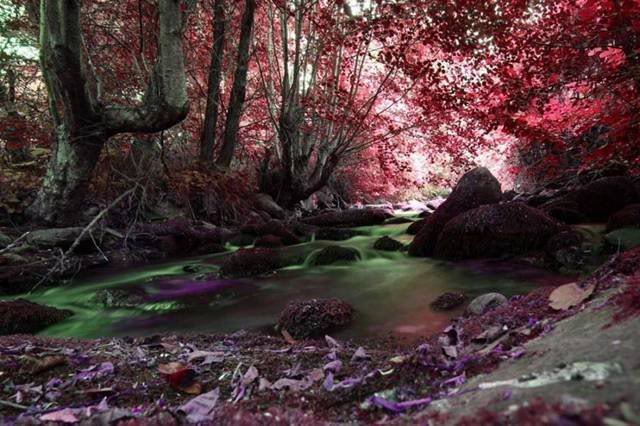 New Banner Colorfulforest