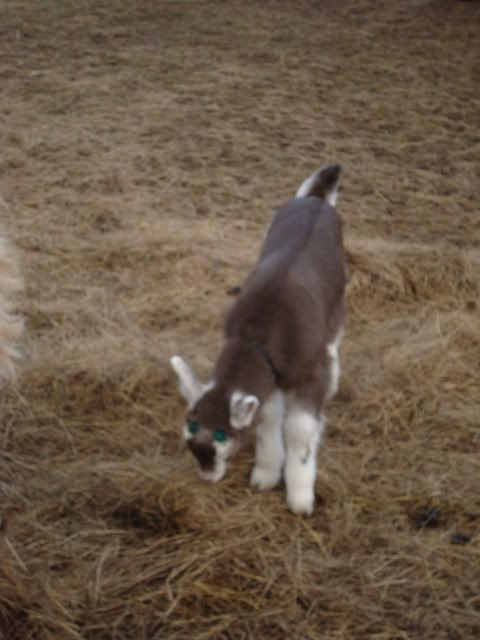 Goat Kids 2010 DSC00697