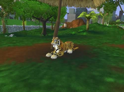 Bengališki tigrai Bengaliskastigras4