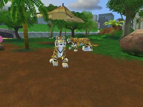 Bengališki tigrai Bengaliskitigrai4