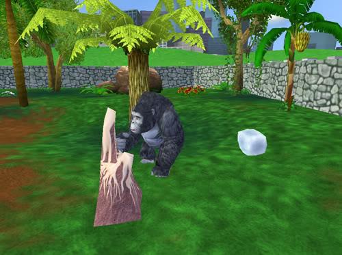 Kalnų gorilos Gorila2