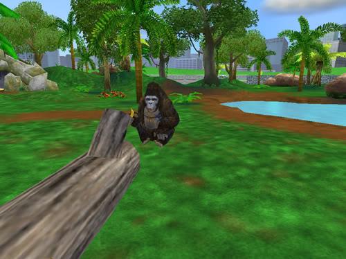 Kalnų gorilos Gorila3