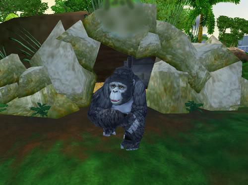 Kalnų gorilos Gorila5