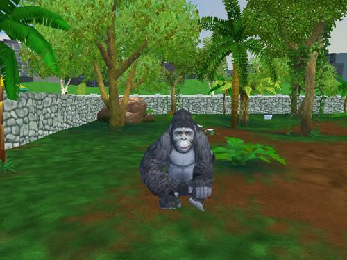 Kalnų gorilos Gorila6