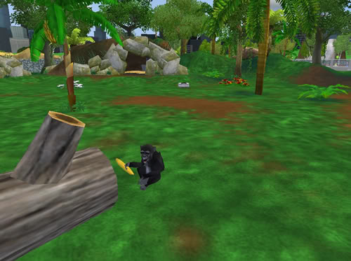 Kalnų gorilos Gorila7