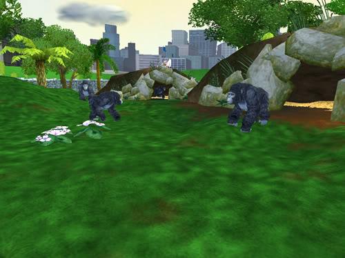 Kalnų gorilos Gorilos4