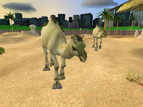 Vienakupriai kupranugariai Kupranugariai1