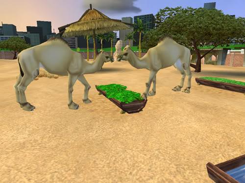 Vienakupriai kupranugariai Kupranugariai3