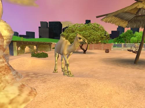 Vienakupriai kupranugariai Kupranugariai4