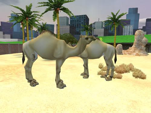 Vienakupriai kupranugariai Kupranugariai5