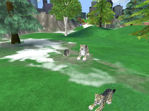 Snieginiai leopardai Snieginiaileopardai3