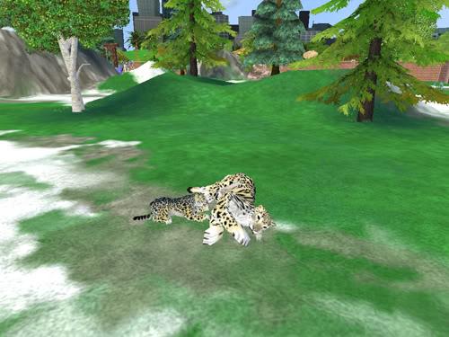 Snieginiai leopardai Snieginiaileopardai4