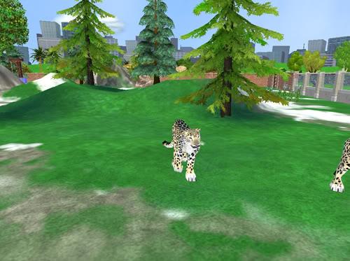 Snieginiai leopardai Snieginisleopardas1