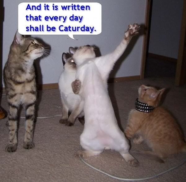 Pazzi come gatti Caturday