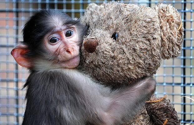Љубовни сликички Monkey-hug-bear_793959i