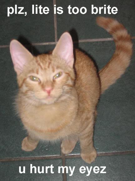 Funny Cat Pics! Lite