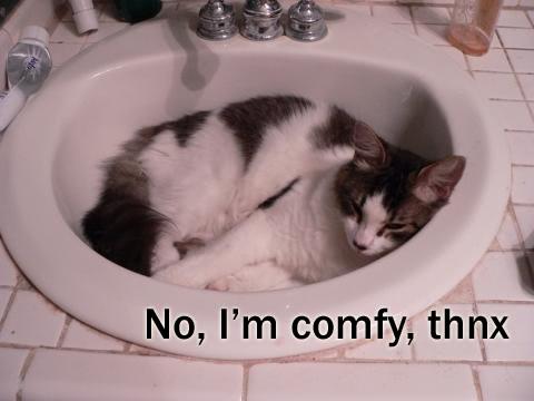Funny Cat Pics! Comfy