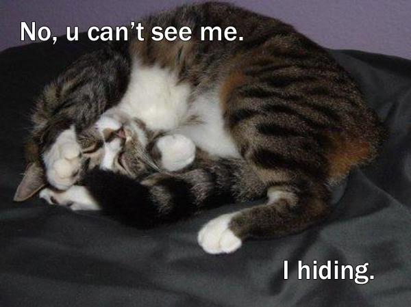 Funny Cat Pics! Hiding