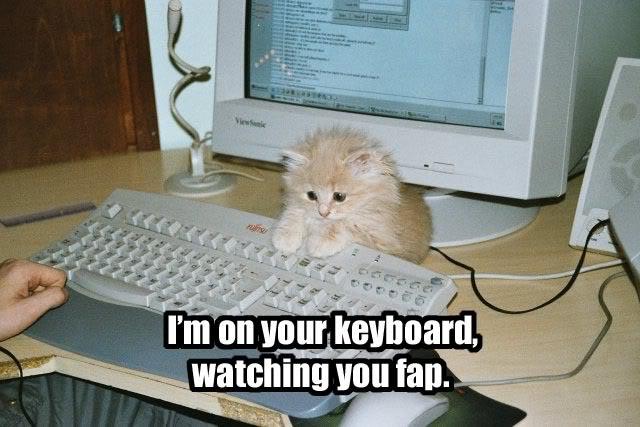 Caturday ftw Keyboardcat