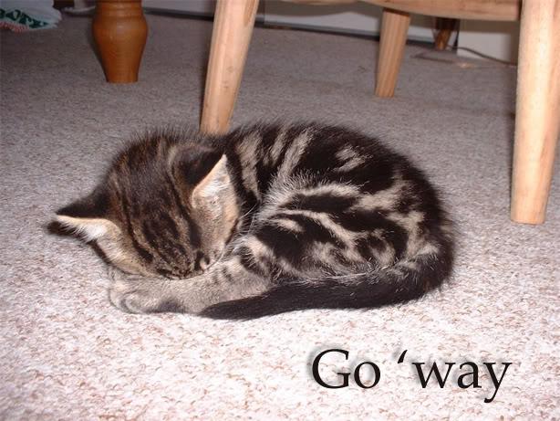 Funny Cat Pics! Leave