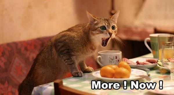 Funny Cat Pics! More_now_cat