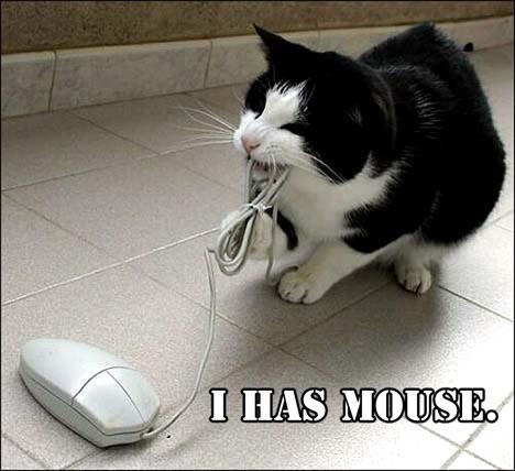 Funny Cat Pics! Mouse