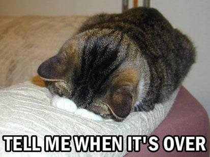 Funny Cat Pics! Notgonnalook