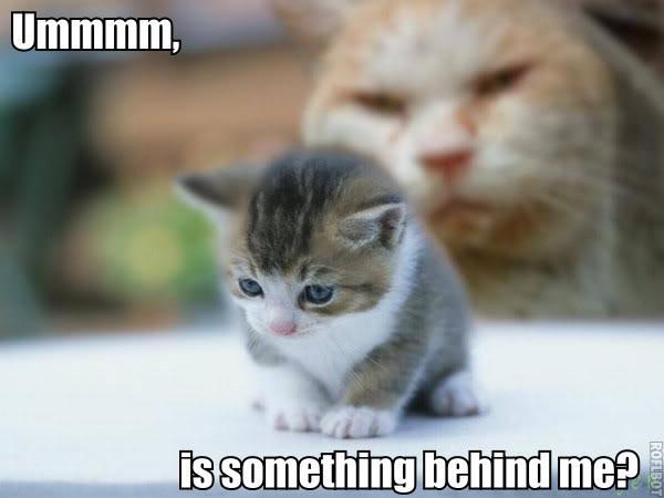 Funny Cat Pics! Somethingbehindme