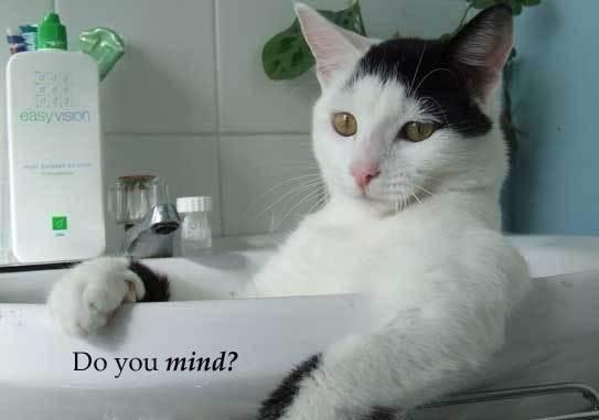 Funny Cat Pics! Takinabath