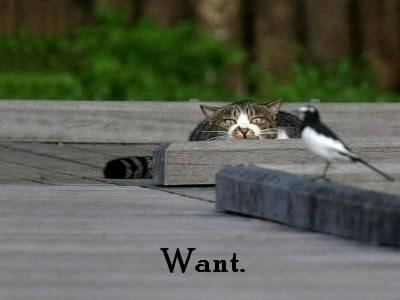 Funny Cat Pics! Wantbird