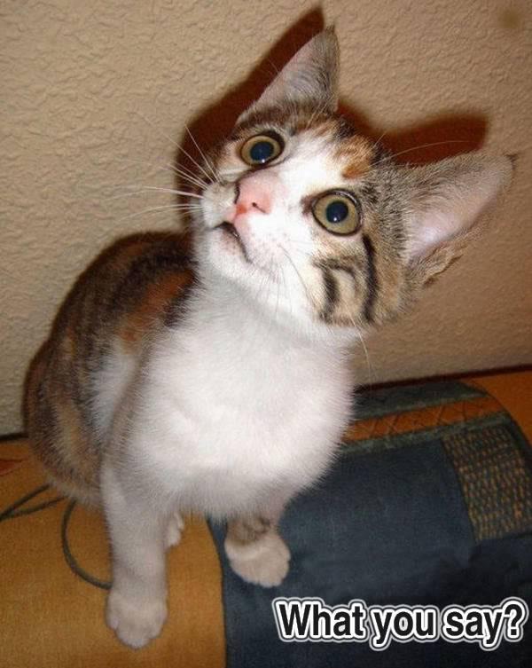 Funny Cat Pics! Whatusay