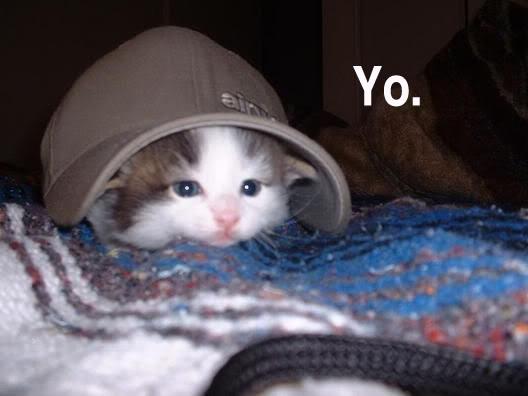 Funny Cat Pics! Yo-1