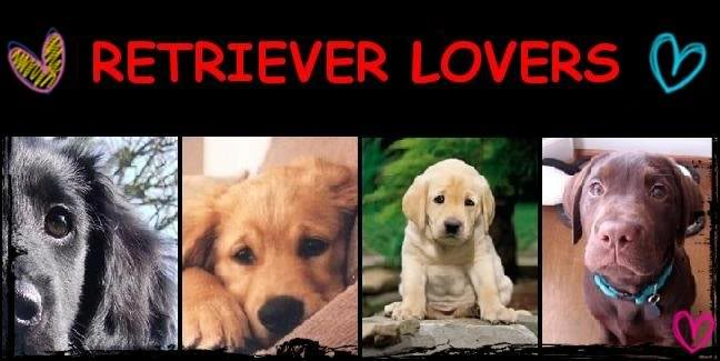 Retriever lovers