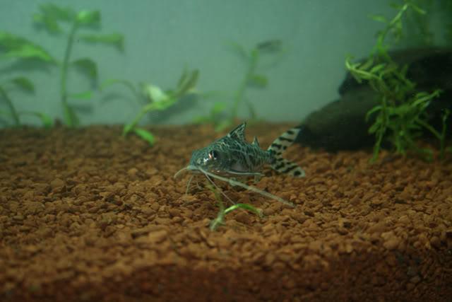 Mi nuevo acuario. IMG_8332