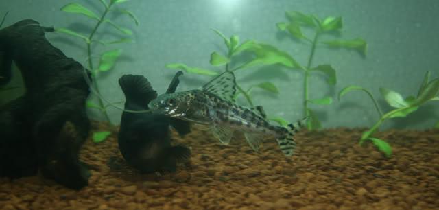 Mi nuevo acuario. IMG_8335