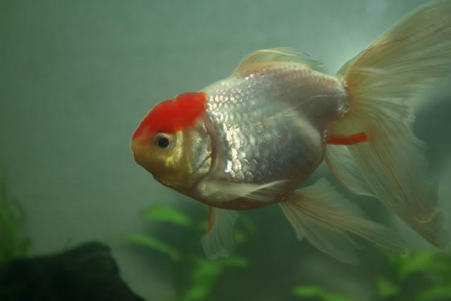 Mi nuevo acuario. IMG_8336
