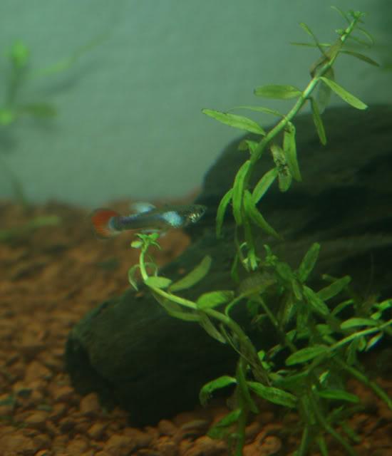 Mi nuevo acuario. IMG_8338