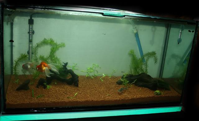 Mi nuevo acuario. IMG_8339