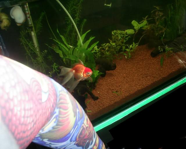Mi nuevo acuario. S4020004