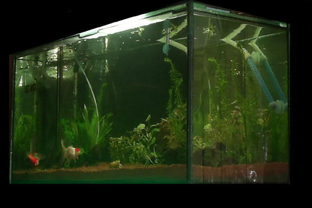 Mi nuevo acuario. S4020004b