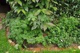 Les géraniums de mon jardin Th_0cf179c1